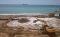 Arena de la playa: ¿Puede estar en peligro de extinción?